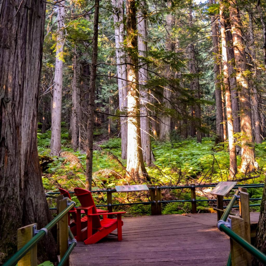 giant cedars boardwalk mount revelstoke national park